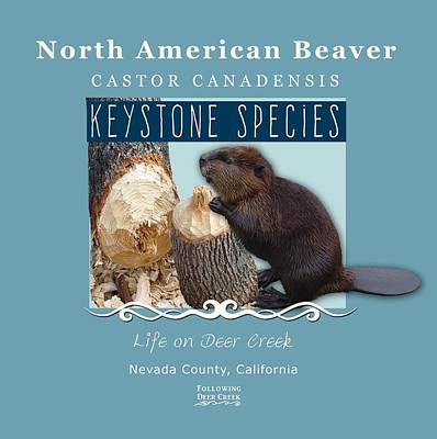 Digital Art - North American Beaver by Lisa Redfern
