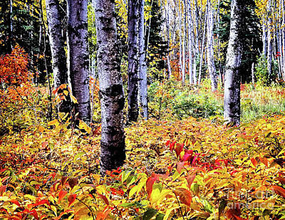 Photograph - Northern Fall by Scott Kemper
