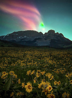 Photograph - Northern Light Show / Augusta, Montana  by Nicholas Parker