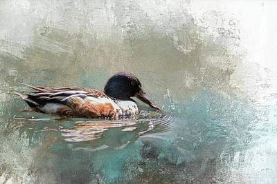 Mixed Media - Northern Shoveler by Eva Lechner