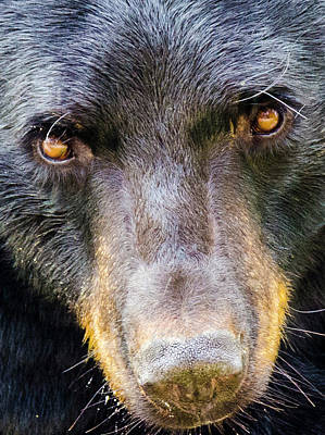 Nosy Bear Art Print