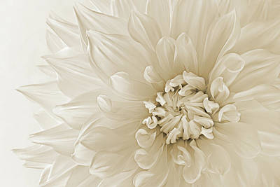 Photograph - Not Quite White by Mary Jo Allen