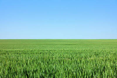 Photograph - Nothing But Wheat by Todd Klassy