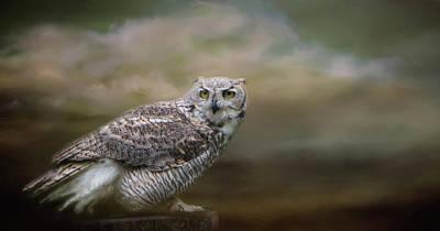 Photograph - Owl Eyes by Marilyn Wilson