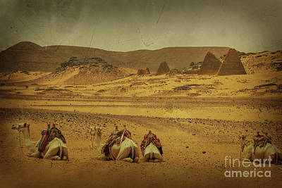 Photograph - Nubian Pyramids Of Meroe by Naoki Takyo