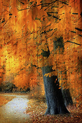 Photograph -  Rustic Autumn Path by Jessica Jenney