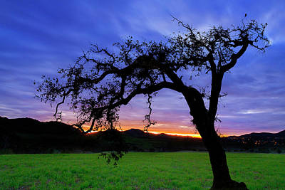 Photograph - Oak At Sunset by John Rodrigues
