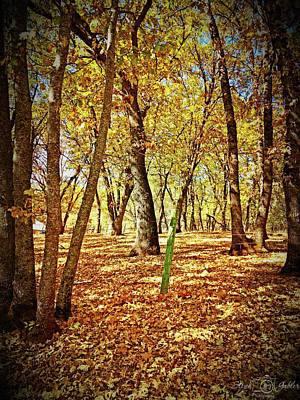 Photograph - Oak Forest by Steph Gabler