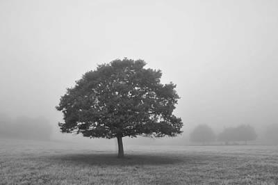 Photograph - Oak In Fog Monochrome by Marek Stepan