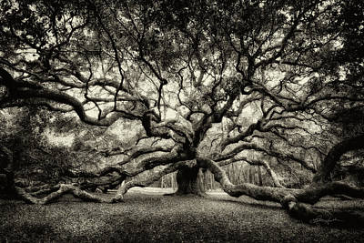 Photograph - Oak Of The Angels - Sepia by Renee Sullivan