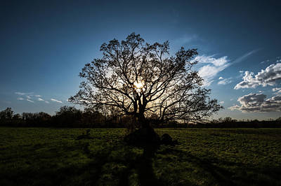 Photograph - Oak Silhouette by Dan Urban