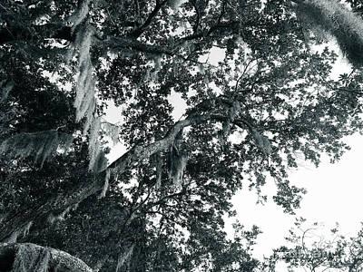 Photograph - Oak The Sky by Robert Knight