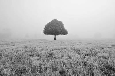 Photograph - Oak Tree In Morning Fog by Marek Stepan