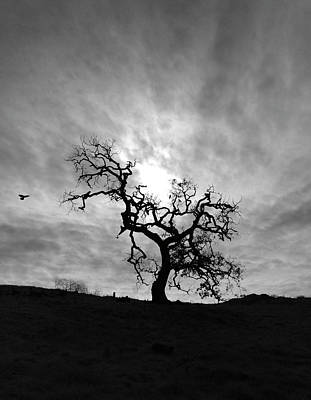 Photograph - Oak Tree Silhouette by John Rodrigues
