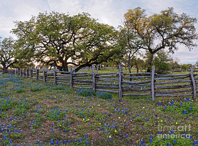 Katharine Hepburn - Oaks, fence, and bluebonnets - Willow City Loop Fredericksburg - Texas Hill Country by Silvio Ligutti