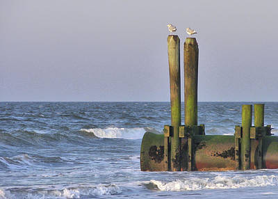 Photograph - Ocean Piling Perches by JAMART Photography