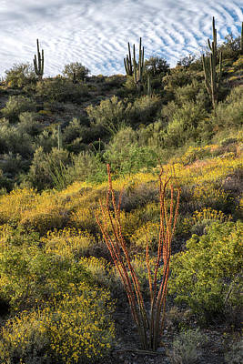 Photograph - Ocotillo Cactus Spring Blooms In Arizona by Dave Dilli