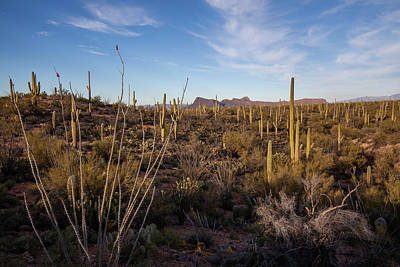 Photograph - Ocotillo Twilight by Lon Dittrick