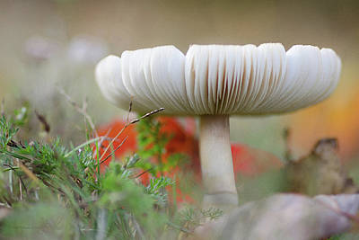 Photograph - October Mushroom by WB Johnston