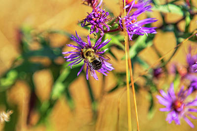 Food And Flowers Still Life Rights Managed Images - October Pollination Royalty-Free Image by Eunice Gibb