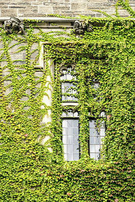 Photograph - Of Windows And Leaves - Ivy Covered by Georgia Mizuleva