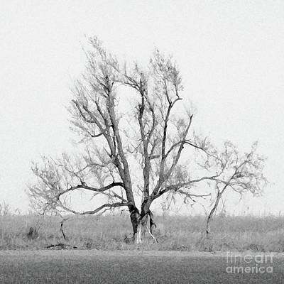 Digital Art - Oklahoma Tree by Cheryl McClure