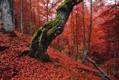 Photograph - Old Beech Tree by Vlad Sokolovsky