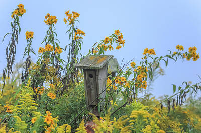 Photograph - Old Bird House In Flowers by Dan Sproul