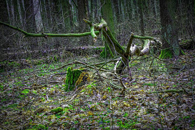 Photograph - Old Forest Find #i6 by Leif Sohlman