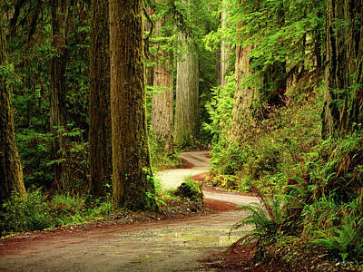 Photograph - Old Growth Forest Route by Leland D Howard