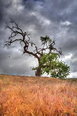 Old Oak Tree Art Print