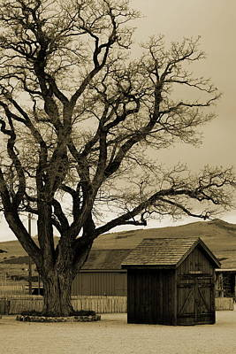 Old Shanty In Sepia Art Print
