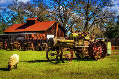 Photograph - Old Steam Tractor And Sheep by Garry Gay
