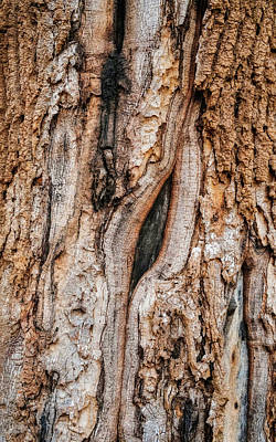 Photograph - Old Tree Bark Patterns by Gary Slawsky