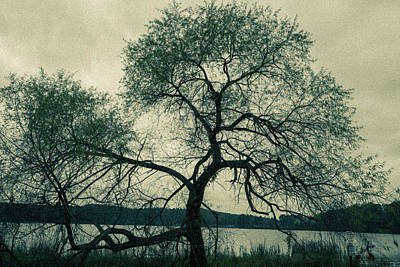 Photograph - Old Tree by James L Bartlett