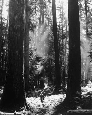 Photograph - Olympic National Park Showing Rain Fores by Loomis Dean