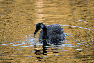 Photograph - On Golden Pond by Robert Potts