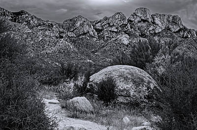 Mark Myhaver Rights Managed Images - On Trail - Catalinas m1124 Royalty-Free Image by Mark Myhaver