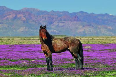 Edward Hopper - Onaqui Mustang in Purple Mustard by Greg Norrell