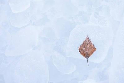 Blue Hues - One birch tree leaf frozen on ice by Juhani Viitanen