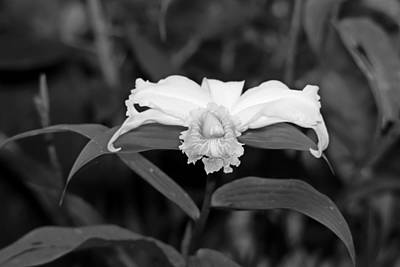 Christmas Christopher And Amanda Elwell - One day Orchid Black and White by Marlin and Laura Hum