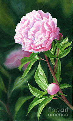 One Pink Peony With Bud Dark Background Original
