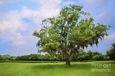 Digital Art - One Solitary Tree Painted by Sharon McConnell