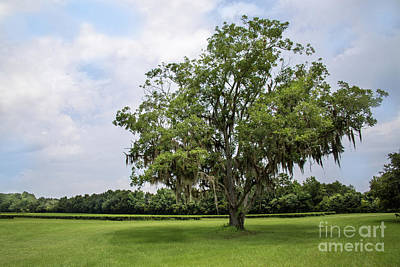 Photograph - One Solitary Tree by Sharon McConnell