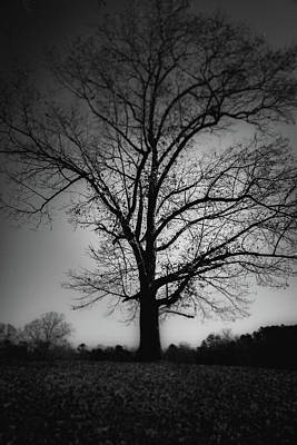 Photograph - One Tree Silhouette by Doug Camara