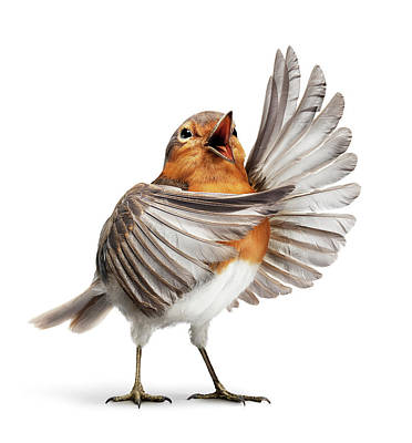 Photograph - Opera Bird 1 by Holloway