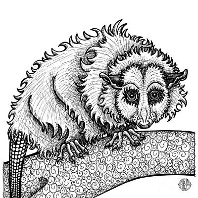 Drawing - Opossum by Amy E Fraser