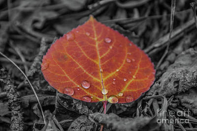 Photograph - Orange Aspen Leaf by Tony Baca