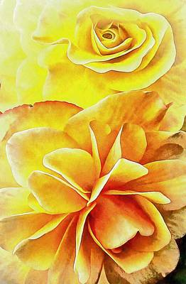 Photograph - Orange Begonias by Dorothy Berry-Lound