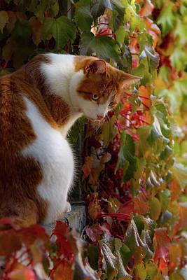 Photograph - Orange Cat by Christine Sponchia